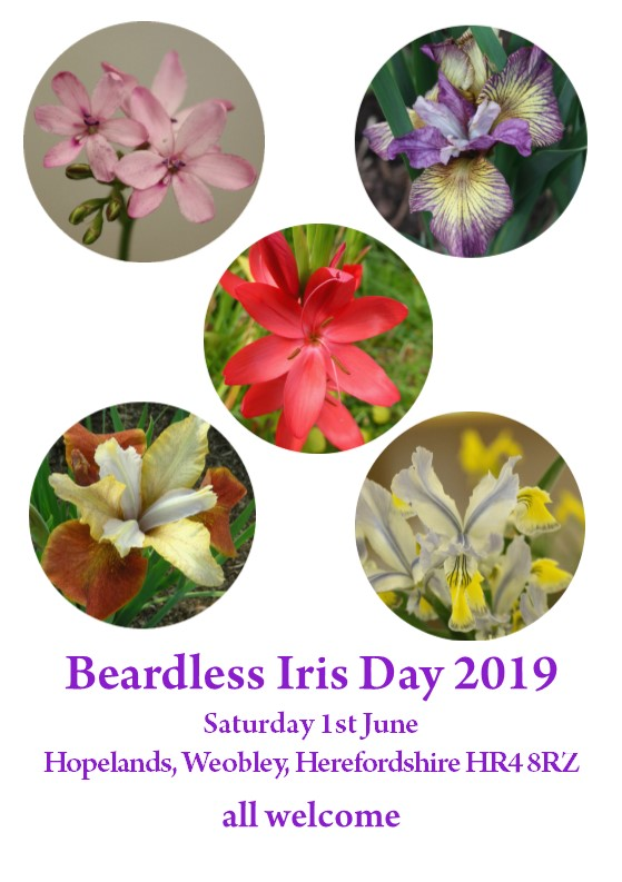 Group for Beardless Irises - Index Page